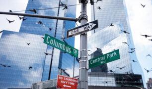 EEUU: rascacielos provocan la muerte de más de 100 millones de aves al año