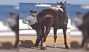 Maltrato animal: hombre patea a caballo para que avance en desfile