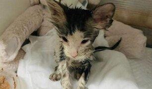Gatita de un mes lucha por su vida tras ser bañada en pegamento