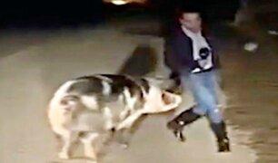 Cerdo ataca a reportero durante trasmisión en vivo