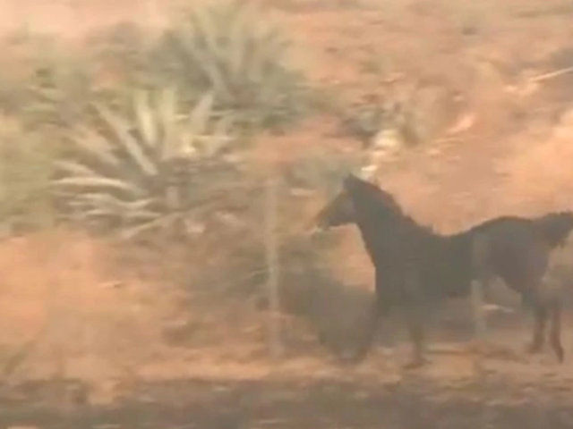 VIDEO: Caballo rescata a su familia de voraz incendio en California