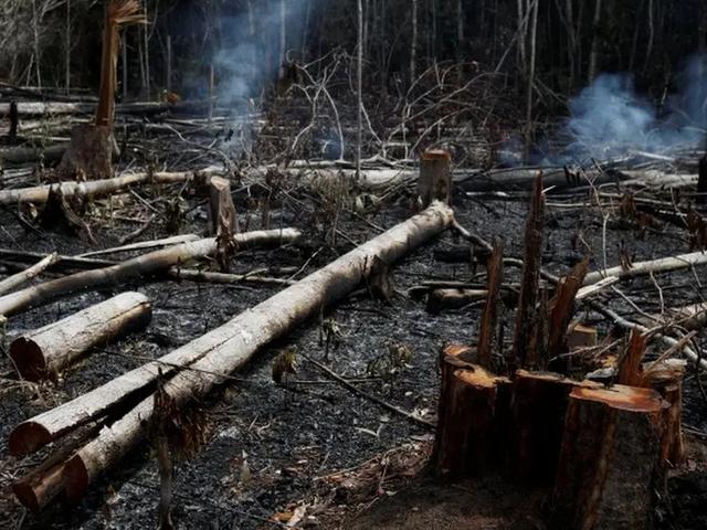 Alarmante: 11 000 científicos declaran emergencia climática mundial