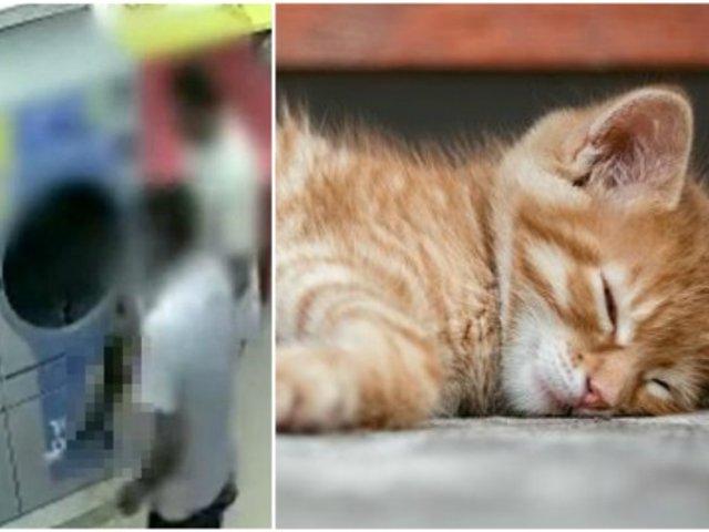 Hombre que mató a gata preñada metiéndola a secadora de ropa es condenado a prisión