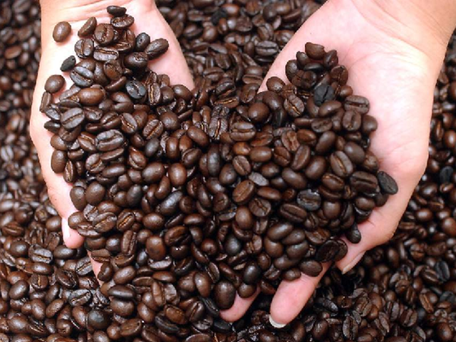 Producción mundial de café disminuirá en el periodo 2019-2020