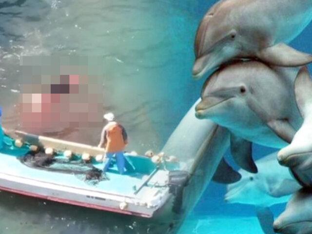 Japón: drone registra brutal cacería de delfines en la ciudad de Taiji