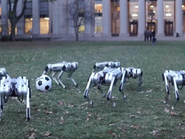 EEUU: presentan prototipos de perros robots ¿para qué servirán?