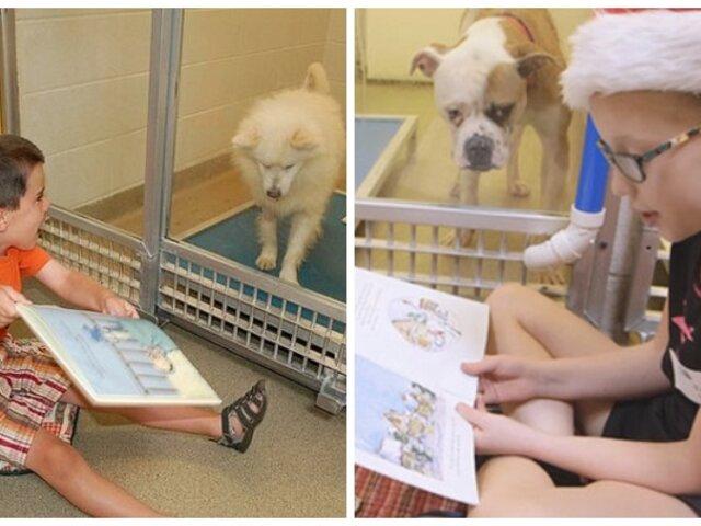 Niños leen cuentos a perros abandonados para reducir su ansiedad