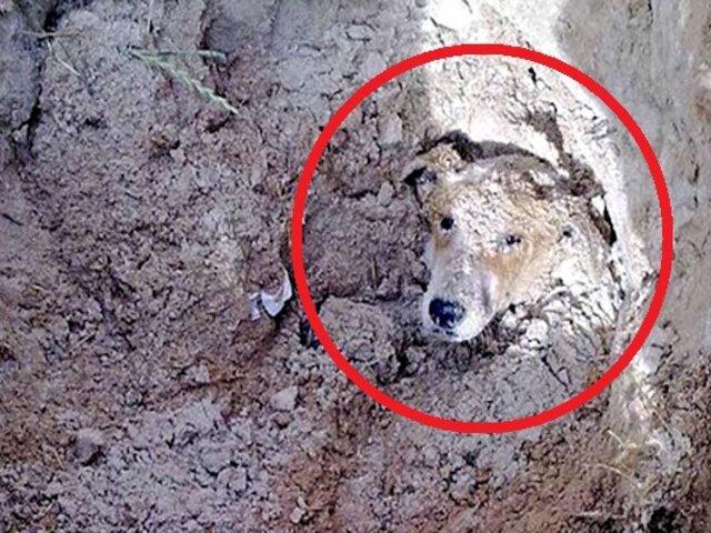 Perro discapacitado fue enterrado vivo porque ''era una molestia''