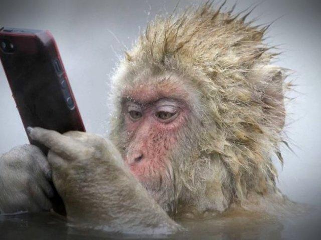 Insólito: mono utiliza celular de su cuidadora para comprar por Internet