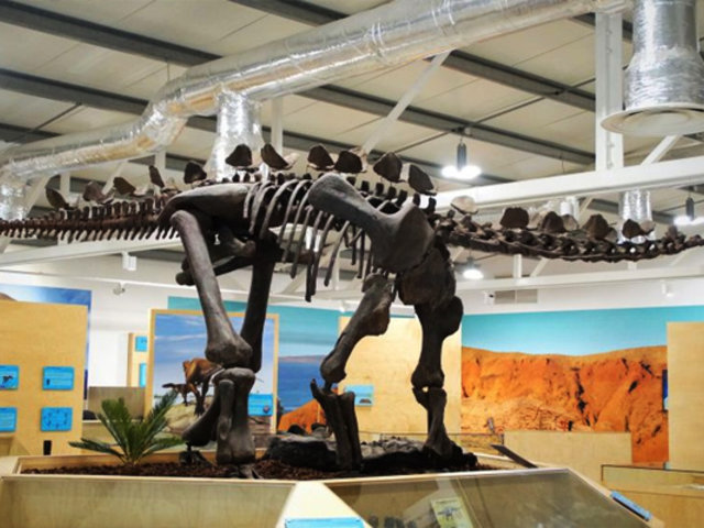 Portugal: hallan el estegosaurio más completo de Europa en un almacén