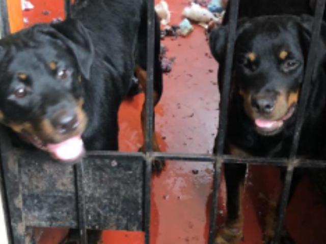 SMP: rescatan a cachorros encerrados cuatro meses en departamento