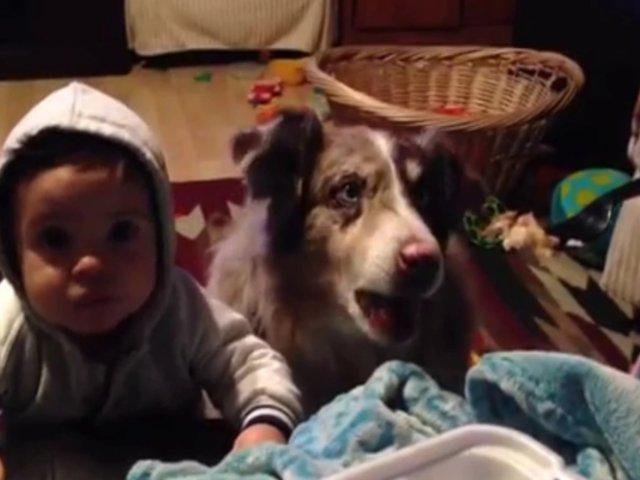 """Insólito: perro aprende a decir """"mamá"""" para que le den comida"""