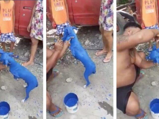 Maltrato animal: hombre pinta a su perro de azul para ''curarlo de la sarna''
