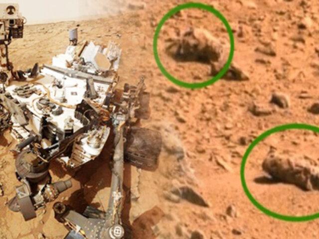 NASA: científico afirma que hay presencia de insectos en Marte