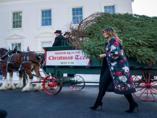EEUU: Melania Trump recibió enorme árbol navideño para decorar la Casa Blanca