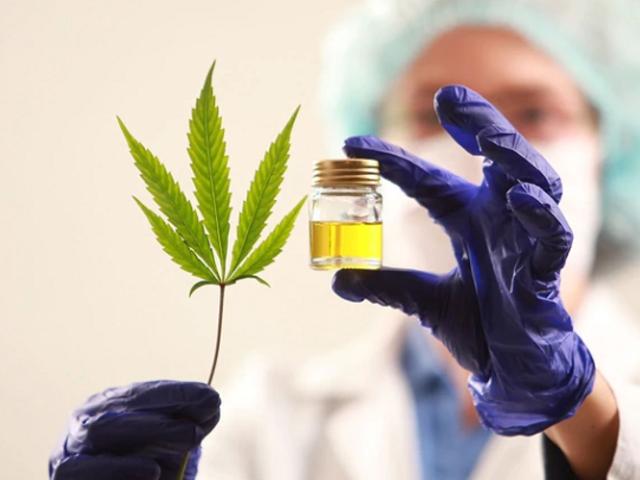 Cannabis medicinal empezará  a comercializarse en farmacias de Lima