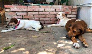Venezuela: mascotas también sufren los efectos de la crisis económica