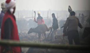 De terror: sacrifican a más de seis mil búfalos para ritual