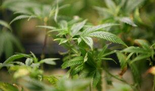 Brasil aprueba venta de medicamentos a base de cannabis