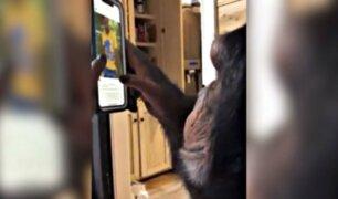 Mono que usa Instagram causa revuelo a nivel mundial