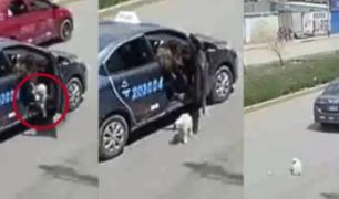 Huancayo: captan a mujer abandonando a un perro en plena calle