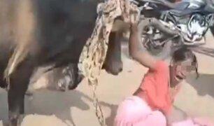Toro embiste de forma brutal a una mujer en la India