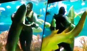 """Buzo baila """"vals"""" dentro de un acuario con un enorme tiburón"""