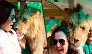 Rusia: sepa la razón por la que este león se abalanzó sobre una mujer