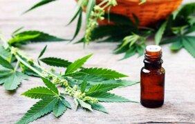 Minsa inició importación de productos derivados del cannabis