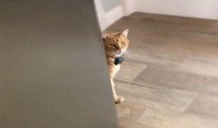 VIDEO: este gato 'habla' inglés y es furor en las redes
