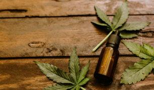 Aprueban protocolo para uso de cannabis medicinal