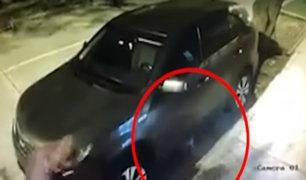 Surco: gato evita que le roben camioneta a su dueño