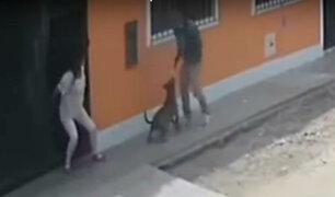 SMP: can se enfrentó a delincuente para defender a su dueña
