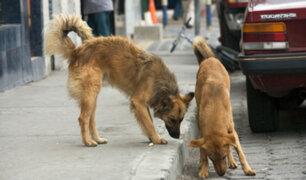 Perros se enfrentan a delincuente para evitar asalto