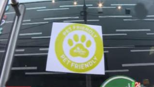 Miraflores: zonas 'Pet Friendly' en restaurantes deberán estar alejadas de la cocina