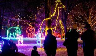 EE.UU: zoológico de Dallas brinda mágico espectáculo de luces navideñas