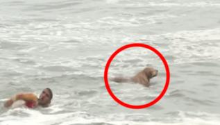 600 salvavidas, entre ellos un can, cuidarán a veraneantes de Lima y Callao