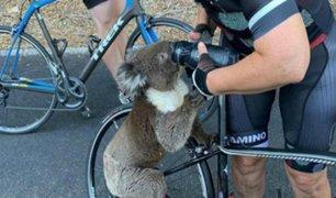 Koala sediento detiene a ciclista para pedirle agua
