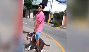 Ate: pitbull mata a perrita de raza pug en parque
