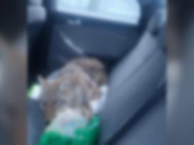 Rescata a ''perro'' herido pero resultó ser un animal salvaje