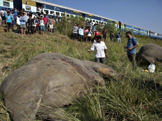 Mueren dos elefantes al ser atropellados por un tren en la India