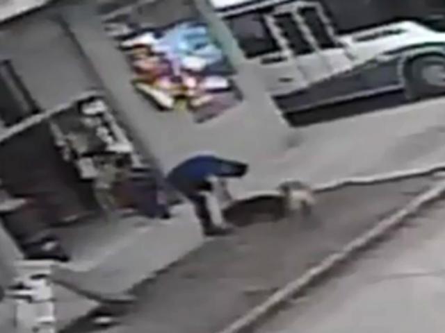 Cusco: graban brutal maltrato de hombre a un perro