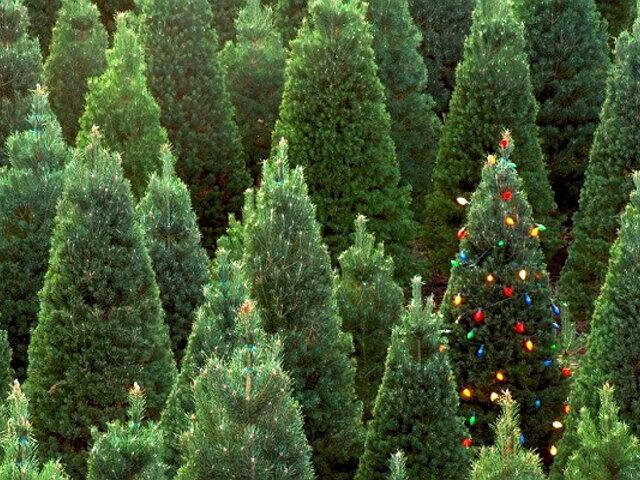 Ideas y consejos para una Navidad ecorresponsable