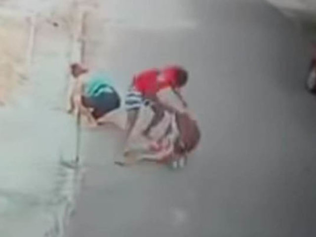 Impactantes imágenes: perro pitbull ataca brutalmente a un niño