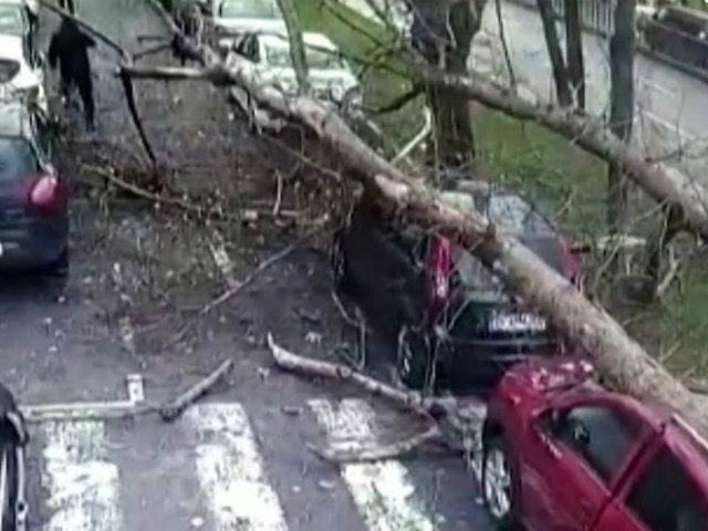 Tres personas salvaron de morir aplastadas por árbol en Turquía