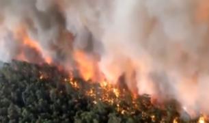 Devastador: lenguas de fuego arrasan imparables los bosques en Australia