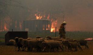 Australia: animales protagonizan conmovedoras escenas durante incendios