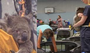 """Escuela de Australia se convirtió en """"hospital"""" para koalas heridos por incendios"""