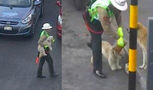 Tacna: Policía de tránsito ayuda a cruzar a dos perros callejeros y los alimenta