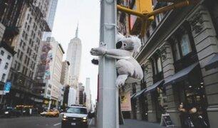 ¿Koalas en Nueva York? La creativa idea que busca salvar la especie tras incendios en Australia